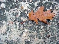 salt_leaf.jpg