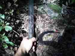 Timber rattlesnake marked.